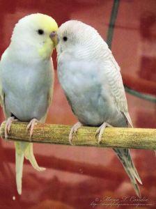 couple2wtr