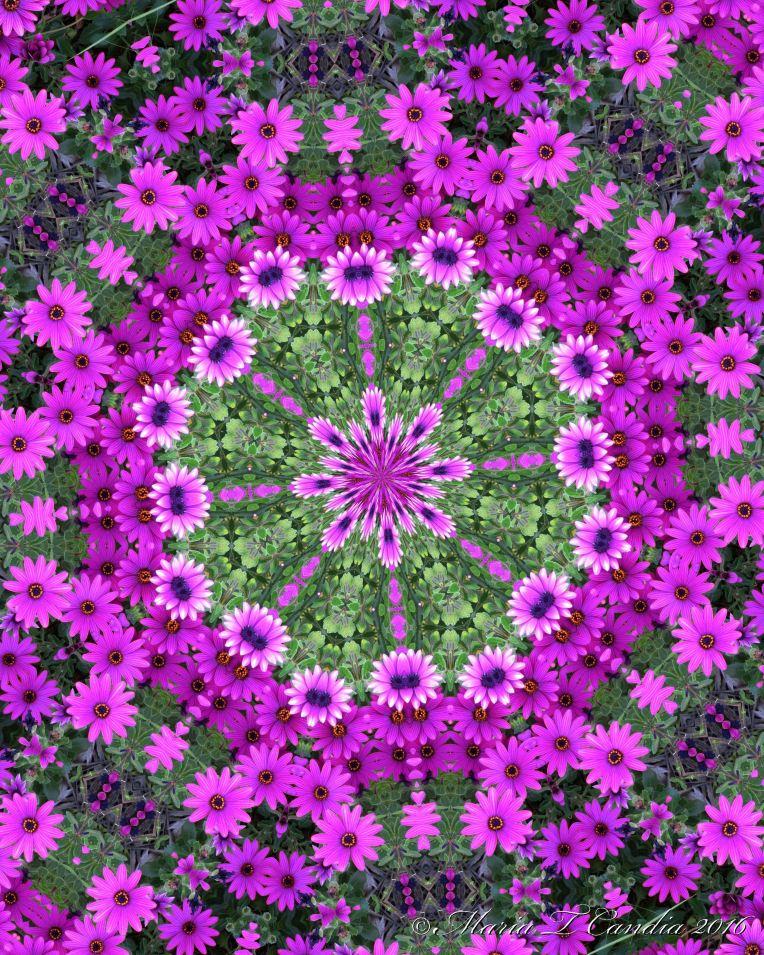 purpleflowers2wtr